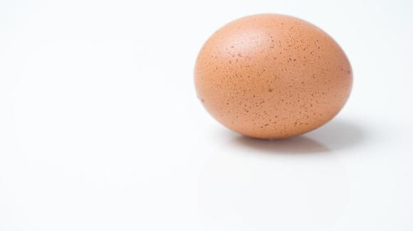 Die skurrilsten Räuber der Welt - Räuber mit rohem Ei bewaffnet