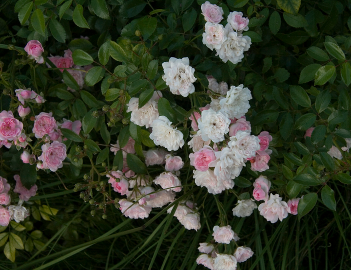 Blumen online kaufen - Testsieger.de vergleicht Online-Blumenhändler