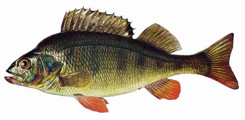 How to Survive: Fische fangen ohne Ausrüstung