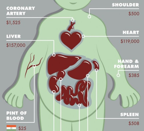 What's the value of your body? The modern trade of organs