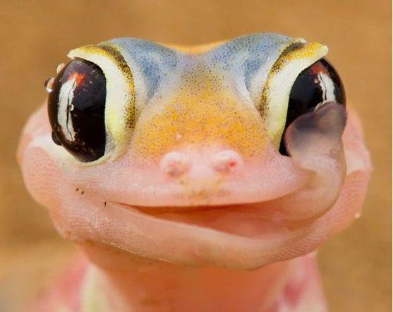 Creepy Nature: Keine Augenlider, kein Problem!