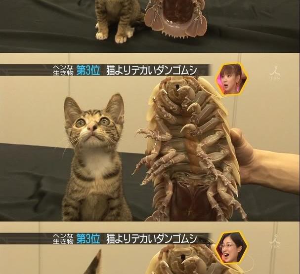 Abgedrehte Haustiere: Riesenasseln als neuer Haustiertrend in Japan