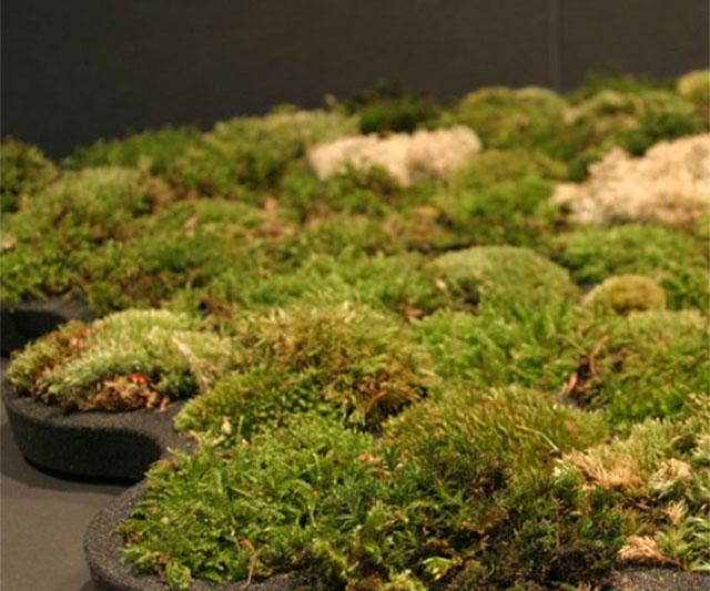 Sambla dušimatt - dušis matt loodusesõpradele