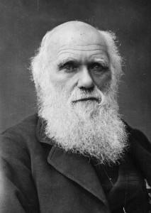 8_Darwin-1fzoj4d