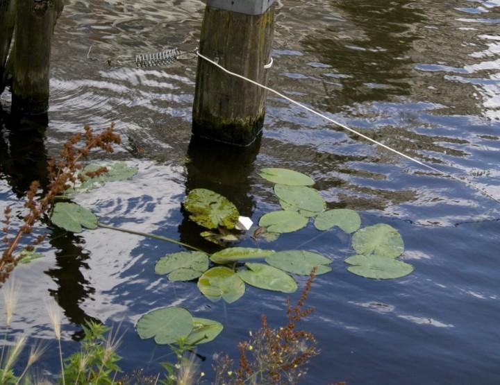 How to Survive: Wasser nahezu perfekt abkochen