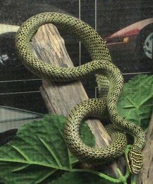 Creepy Nature: Von fliegenden Schlangen