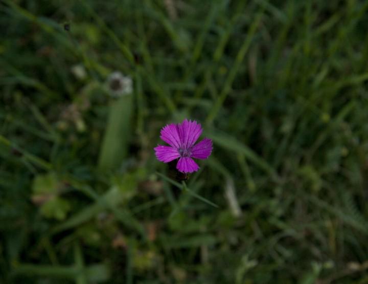 How to Survive: Essbare Pflanzen erkennen