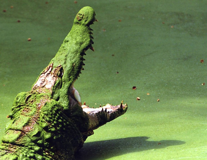 How to Survive: Krokodile - Angriffe verhindern und abwehren
