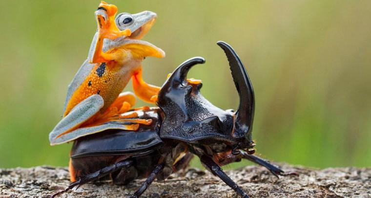 Creepy Nature: Wenn Tiere auf Tieren reiten