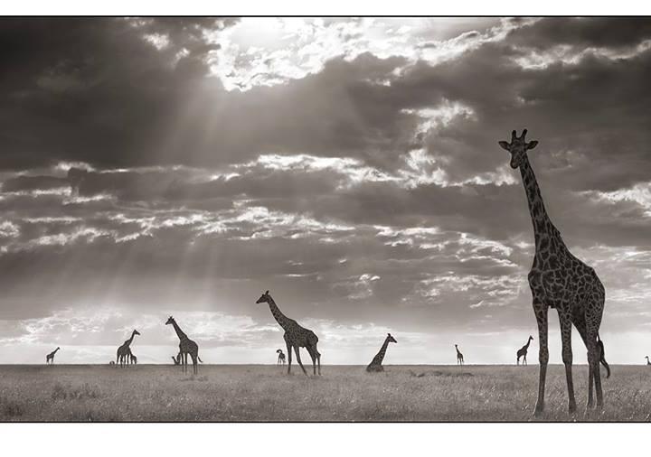 Künstler im Fokus: Nick Brandt- unglaubliche Naturspektakel, eingefangen auf Fotos