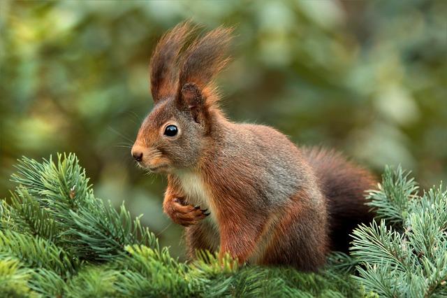 Die kleinen Behüter des Waldes