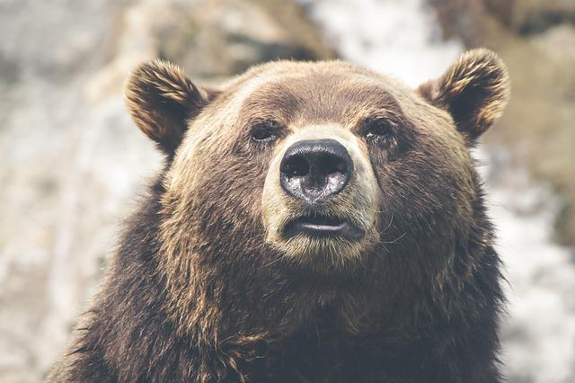 Die Jäger und der Bär