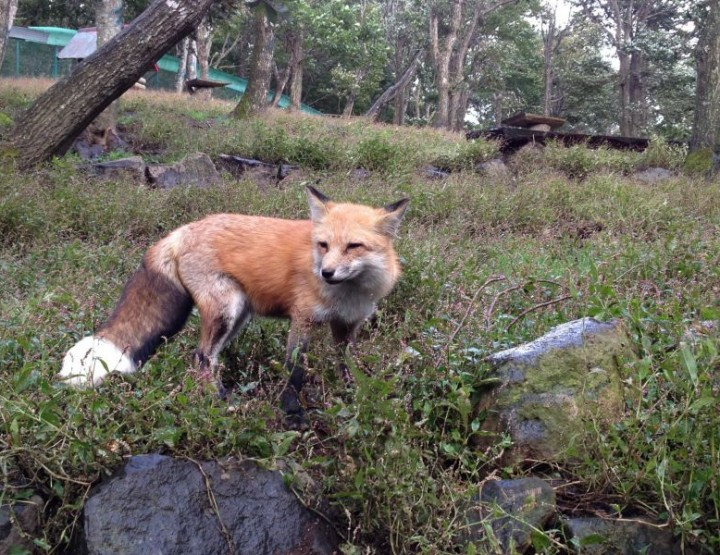 Japans verrückte Tierinseln