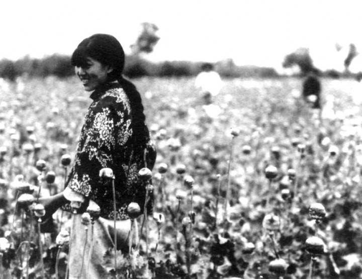 Opium - eine Arznei mit Suchtfaktor