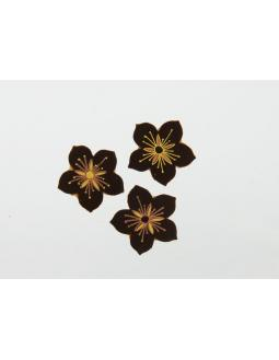 Deko-Blüten aus Zartbitter-Schokolade