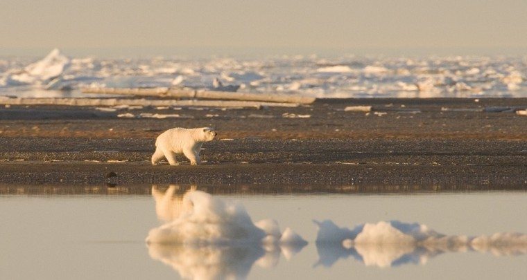 Save the Polar Bears