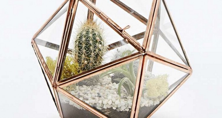 Interior-Trend: Succulents