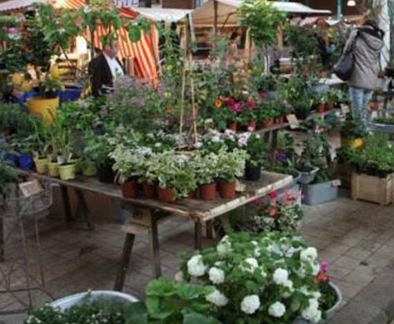 Pflanzzeit- Blumenmesse in der Markthalle Kreuzberg