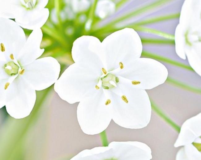 Welche Blume hat welche Bedeutung?