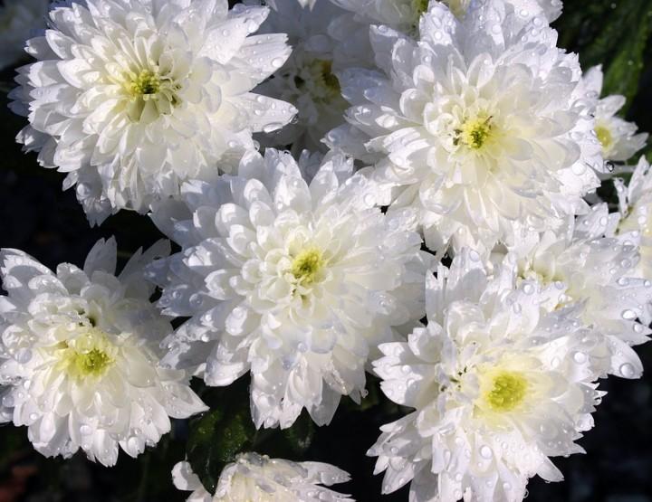 Flora Prima - Blumen online ordern