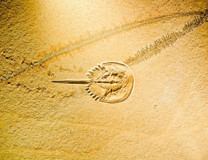 Der Fossilien-Basar in Marokko