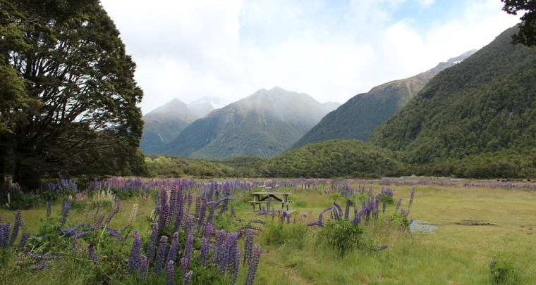 Die gefährdete Inselwelt von Neuseeland