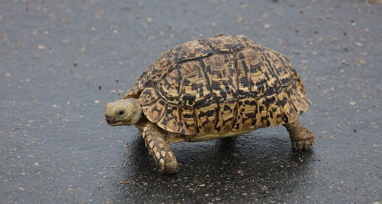 Save a Turtle - Was man dabei falsch machen kann