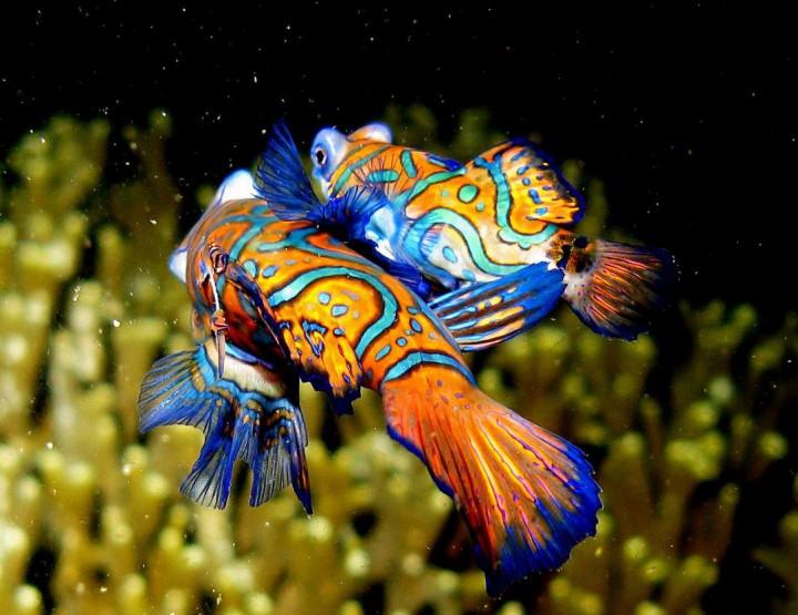 Die farbenfrohsten Tiere
