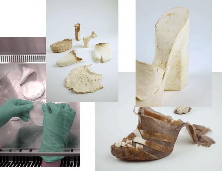 Designer Eco Schuhe aus Pilzen?