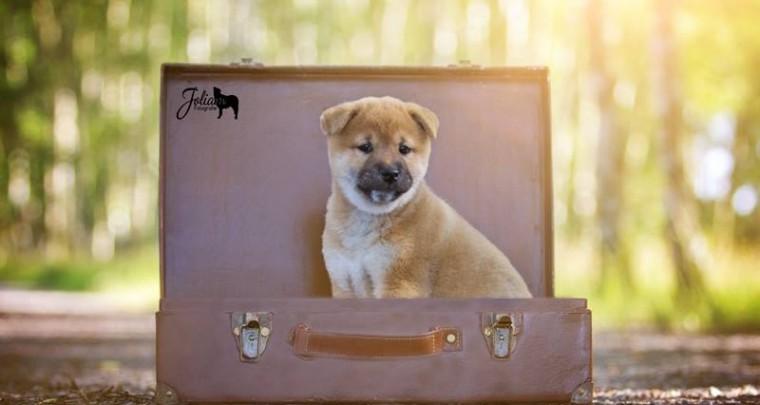 Großbritannien - Traumreiseland für Hundehalter?
