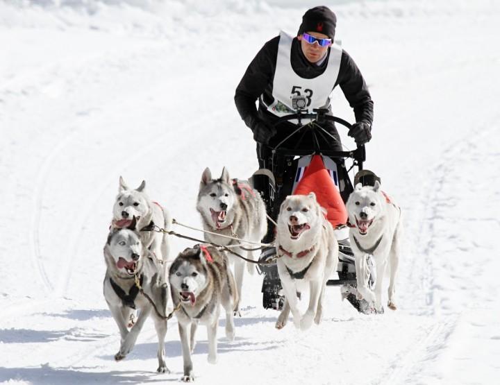 A storia di sport di cani di slitta