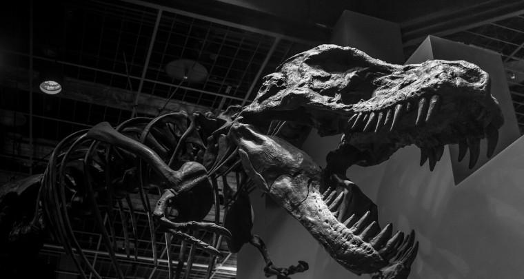 Warum waren die Tiere vor Millionen von Jahren so viel größer?