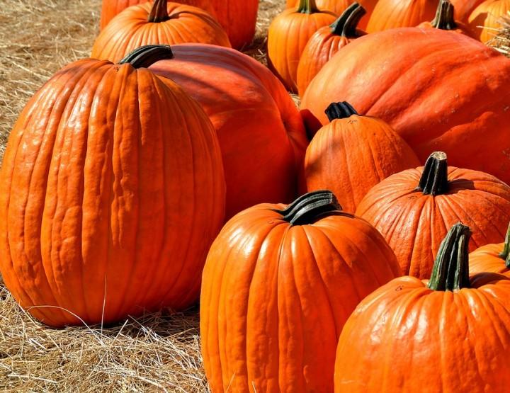 October? staghjoni zucca!