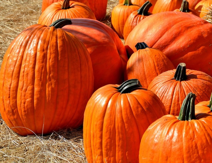 Oktober? Kürbissaison!