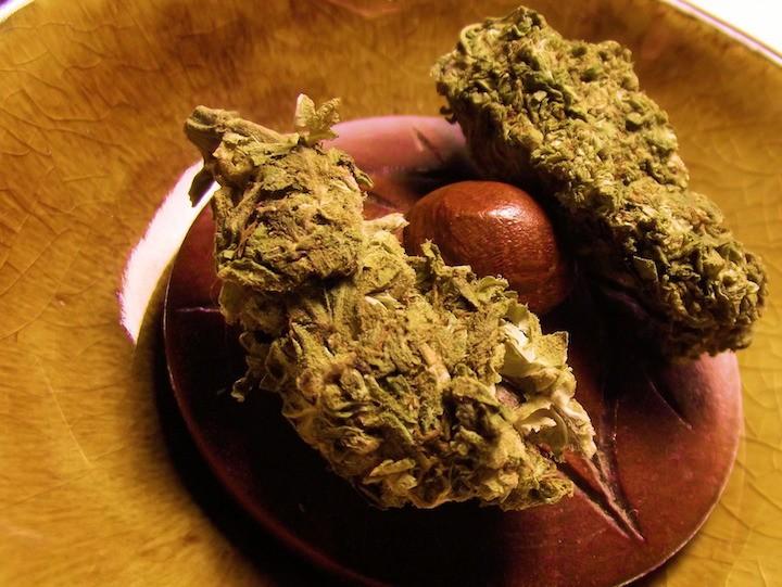 Marihuana zupfen statt Kellnern
