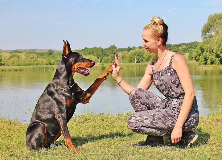 Die Bindung zwischen Hund und Halter