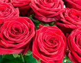 Valentinstagsblumen von Bloomydays, die jedes Herz erobern
