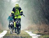 Dogscooting - die neue Trendsportart