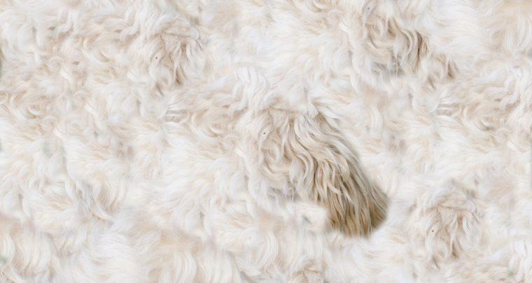 Immer noch im Trend: Faux Fur/Fake Fur