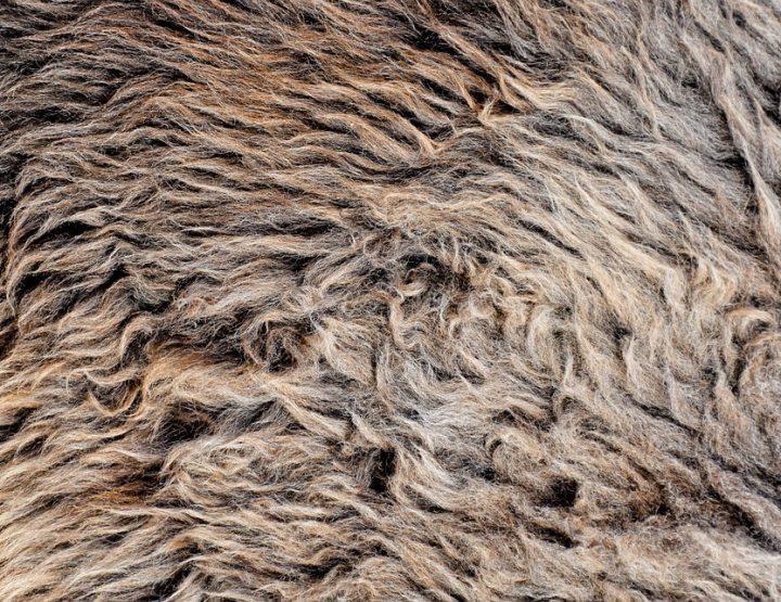 Fake Fur und Veganismus - Ein Konflikt?