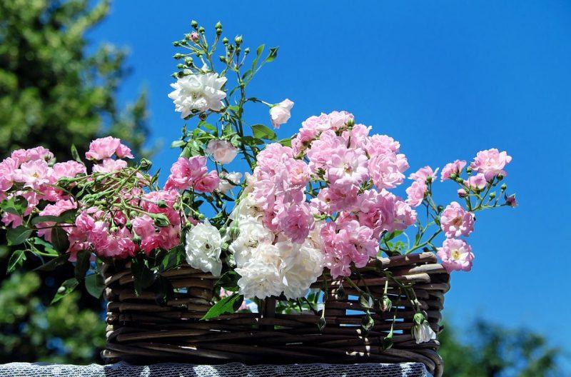 J`adore les fleurs