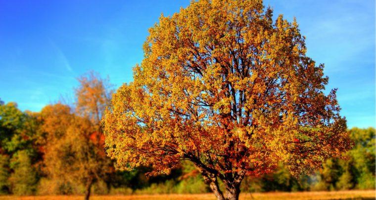 Fünf Gründe sich auf die kalte Jahreszeit zu freuen