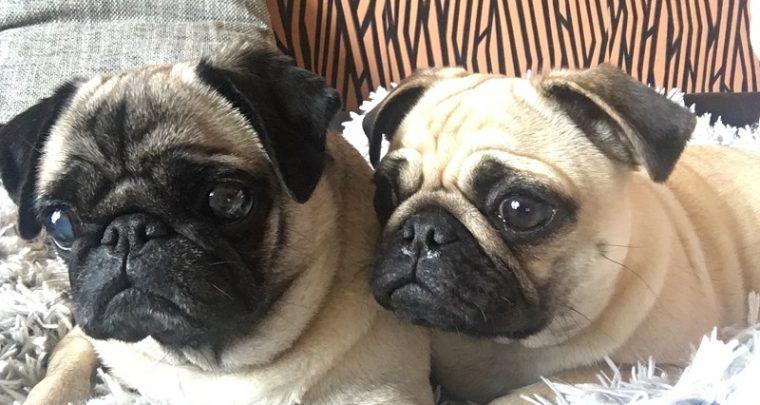 Die süßesten Bürochaoten in Berlin – Coco & Emma