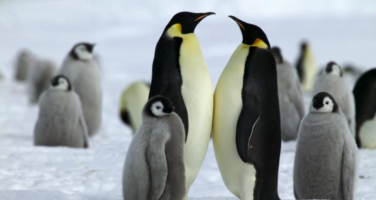Reise in die Antarktis - in eisige Wunderwelt eintauchen