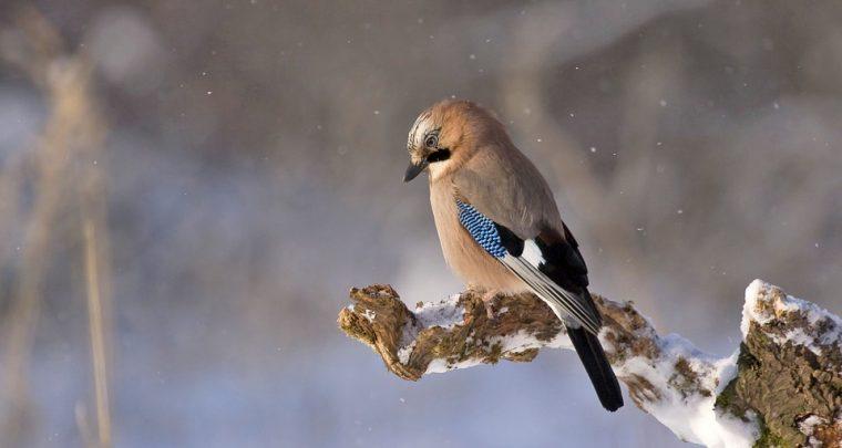 Wildvögel füttern - Das ist zu beachten
