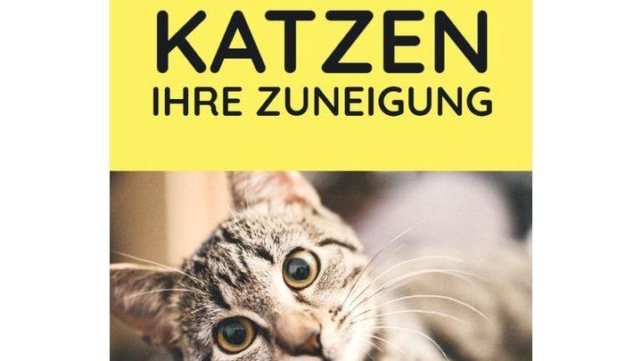 Pinterest präsentiert: Neue Ideen für Dich und deine Katze!
