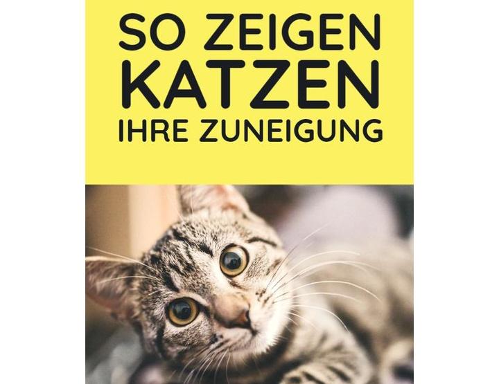 Pinterest esitleb: uusi ideid teile ja teie kassile!